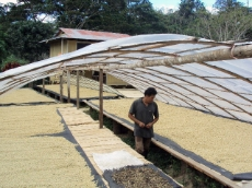 Peru: This farmer is able to dry his coffee more efficiently and with improved quality due to a solar dryer. GIZ supports farmer associations in Peru with expertise on solar dryers. <br />